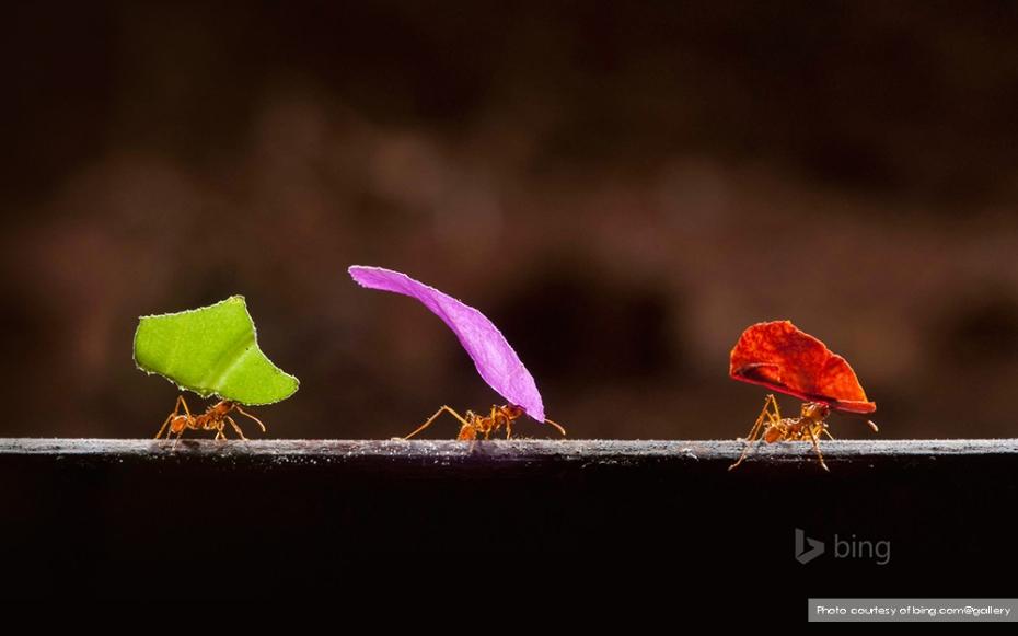 Leafcutter ants in Boca Tapada, Costa Rica