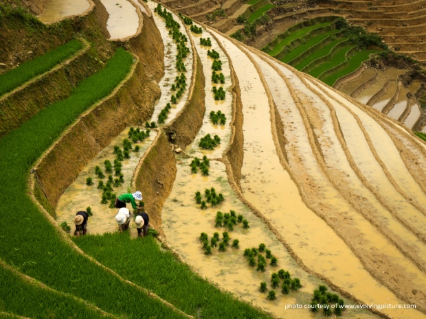 rice-terraces-sapa-vietnam-01.jpg