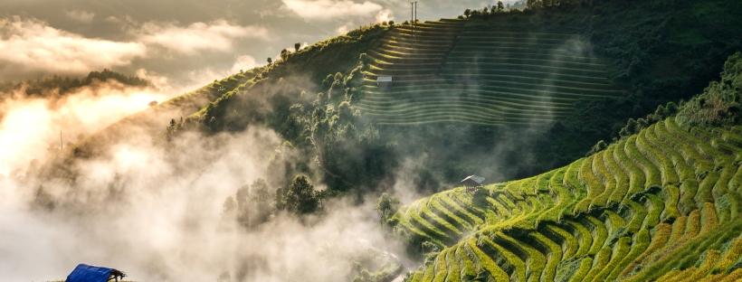 Producción de arroz en el mundo