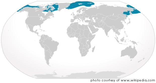Distribución geográfica de la ballena Boreal - www.20minutospordia.com