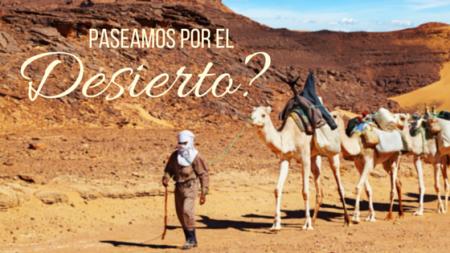 Animales únicos: los camellos del desierto