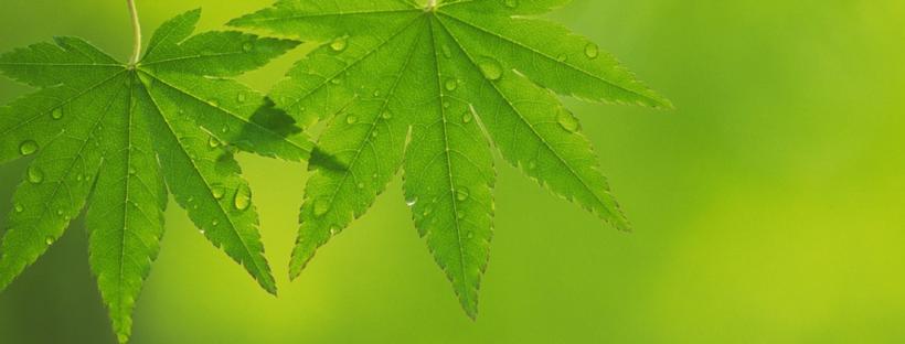Los usos alternativos de la planta de cannabis - 20 Minutos por día