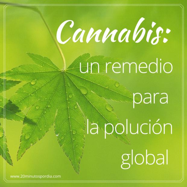 La planta de Cannabis más allá de la marihuana